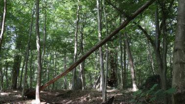 Quel avenir pour les forêts d'Ile-de-France? Donnez votre avis.
